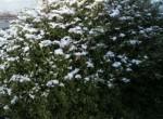 津に来て、初めての積雪